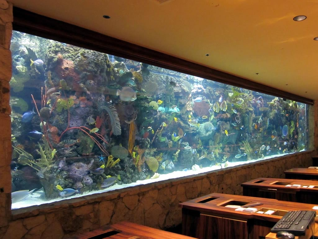 Big tropical fish for aquarium aquarium design ideas for Exotic fish tanks
