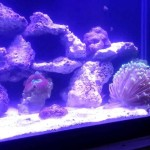 Brass Salt Water Aquarium