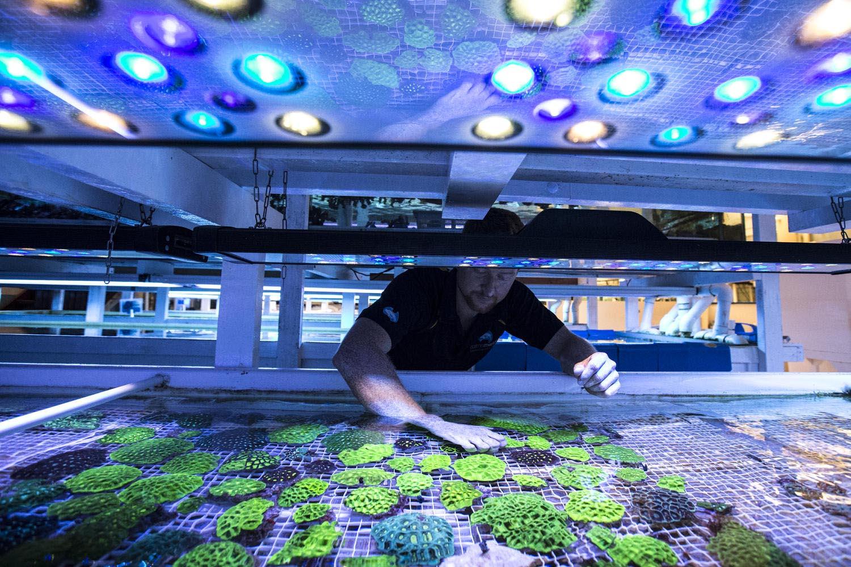 Cairns Marine Aquarium Fish