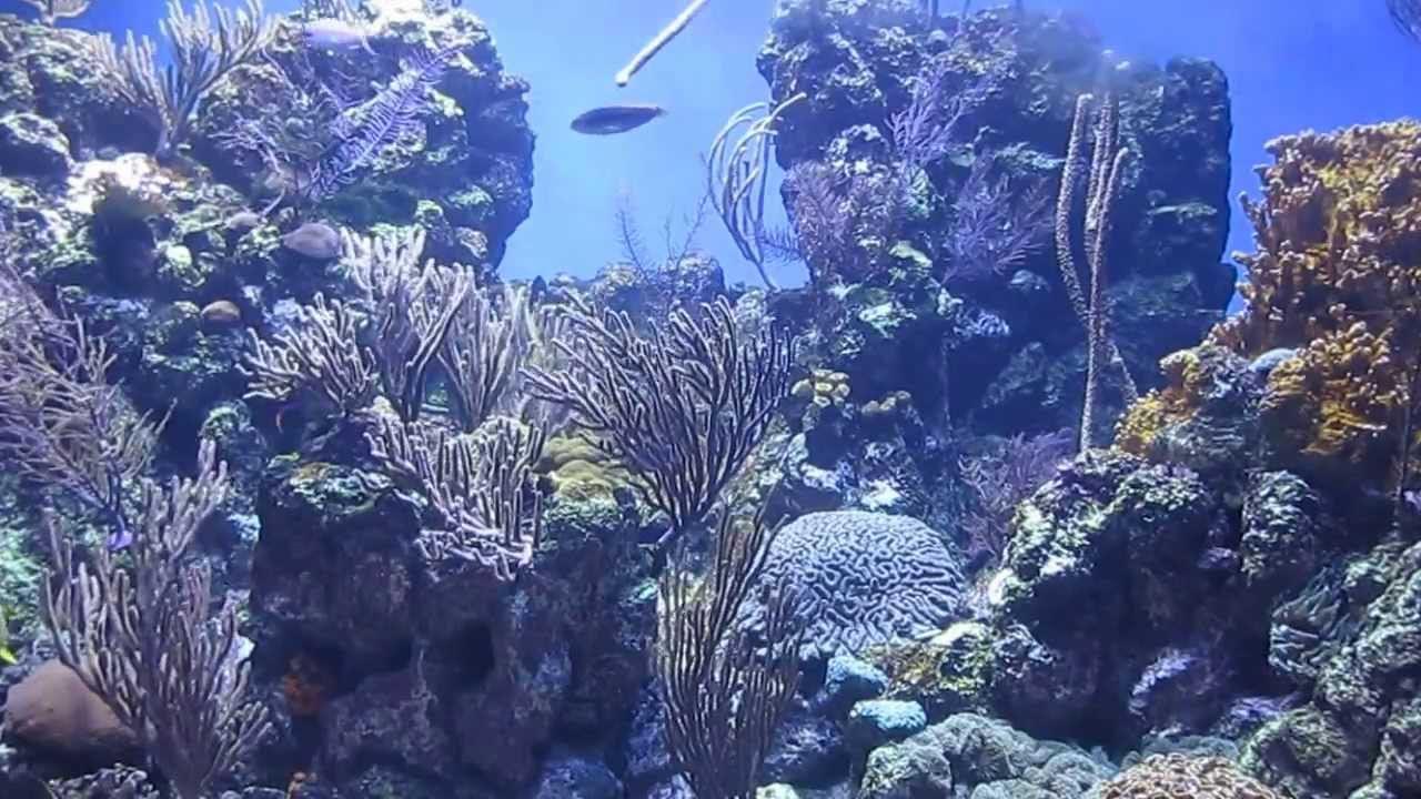 Caribbean Coral Reef Aquarium