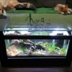 Coffee Table Aquarium Plans