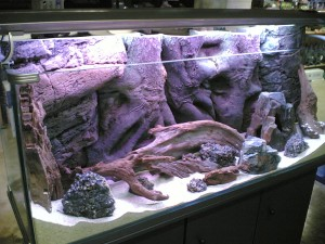 Coldwater Marine Aquarium Fish