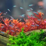 Colorful Live Aquarium Plants