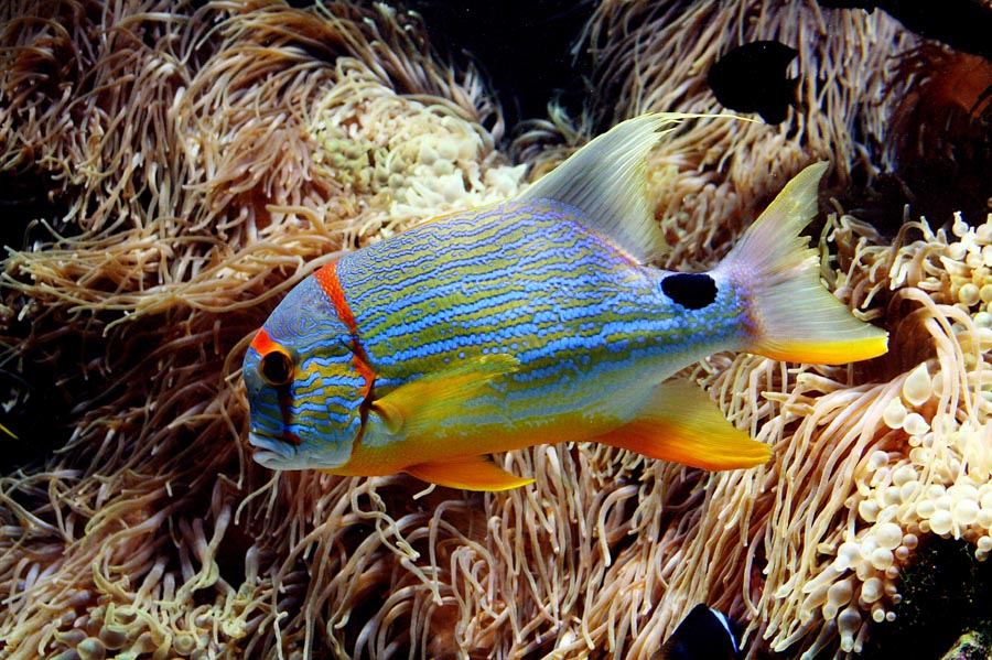 Colorful Saltwater Aquarium Fish