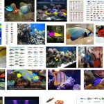 Colorful Saltwater Fish for Aquarium