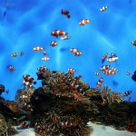 Common Saltwater Aquarium Fish