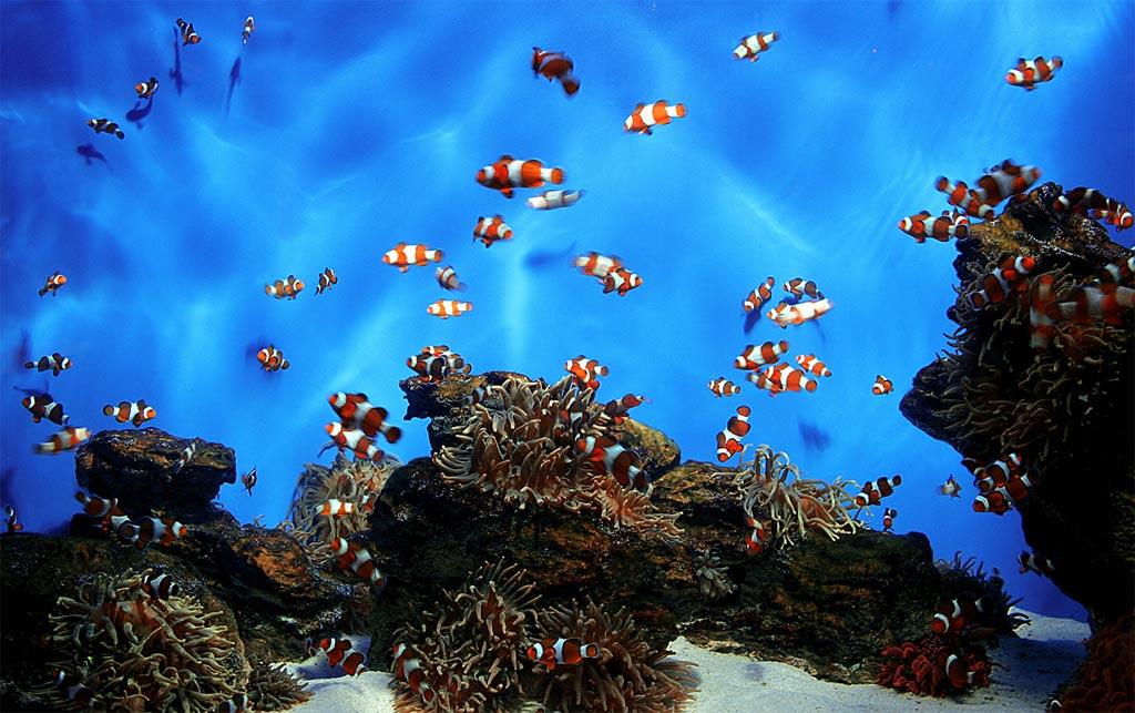 Common Saltwater Aquarium Fish
