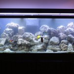 Concrete Salt Water Aquarium