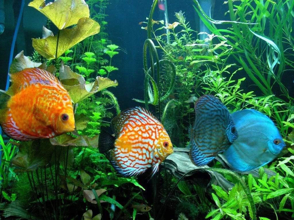 Cool Aquarium Fish Combinations
