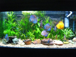 Cool Aquarium Fish Freshwater