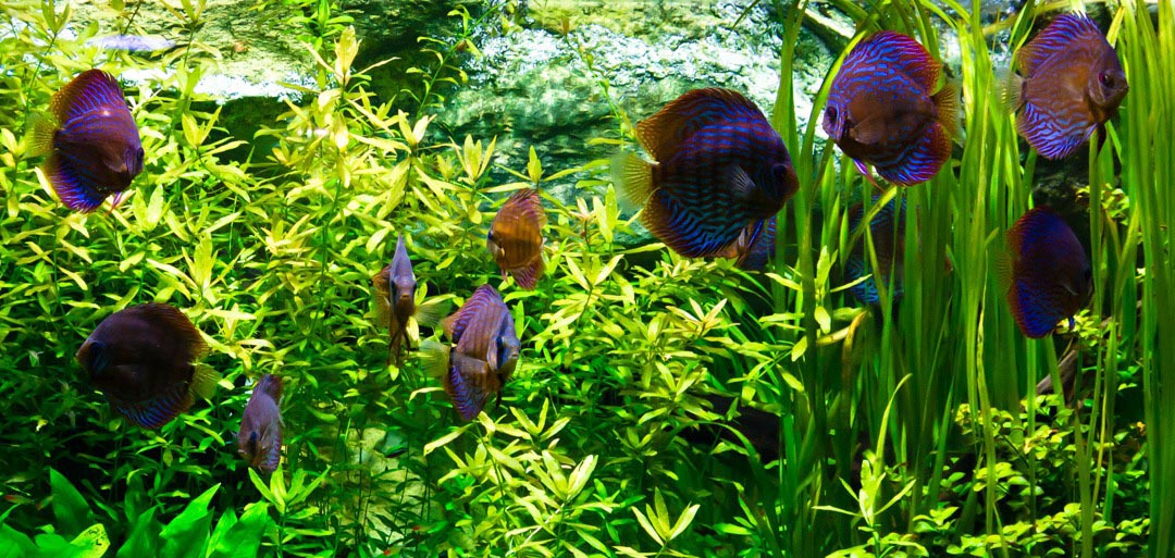 Cool Aquarium Fish Ideas