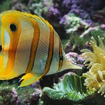 Cool Aquarium Fish Saltwater