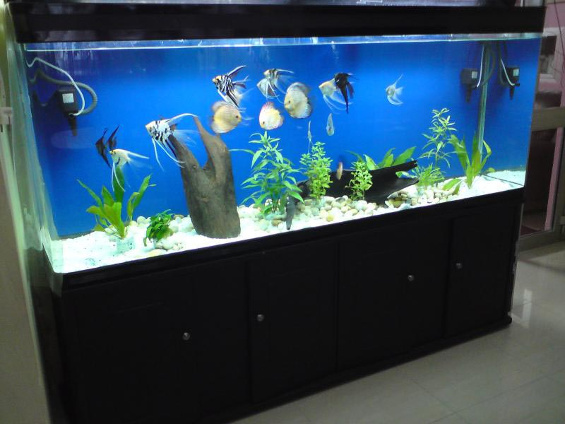 Cool aquarium fish species aquarium design ideas for Coolest freshwater fish