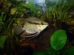Cool Aquarium Freshwater Fish