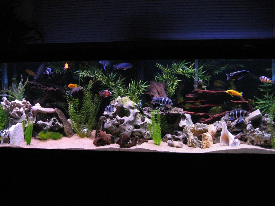 Cool Cold Water Aquarium Fish Aquarium Design Ideas