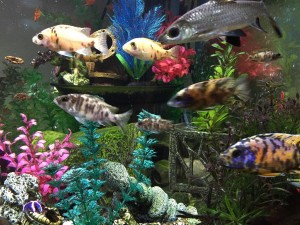 Cool Fish 30 Gallon Aquarium