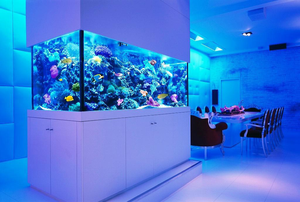 Cool Fish Aquarium Decorations
