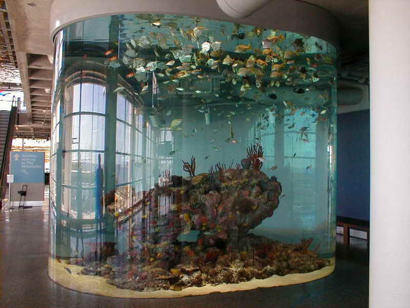 Cool Fish Aquarium Ideas