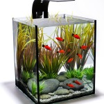 Cool Fish for Aquariums