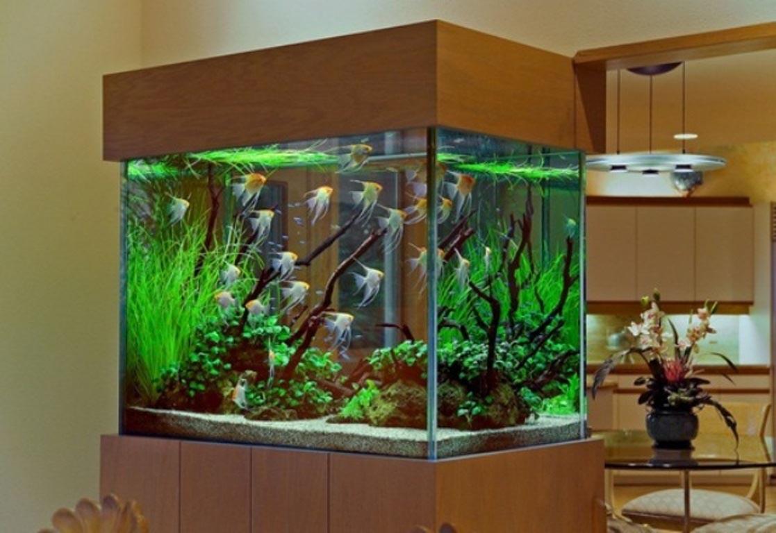 Cool Fish For Freshwater Aquariums Aquarium Design Ideas