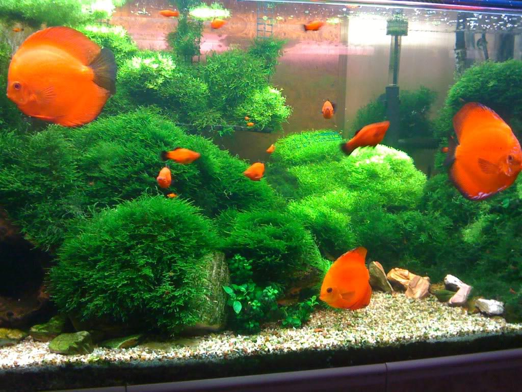 Cool Fish for Planted Aquariums