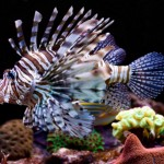 Cool Fish to Put in a Freshwater Aquarium
