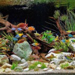 Cool Freshwater Aquarium Community Fish