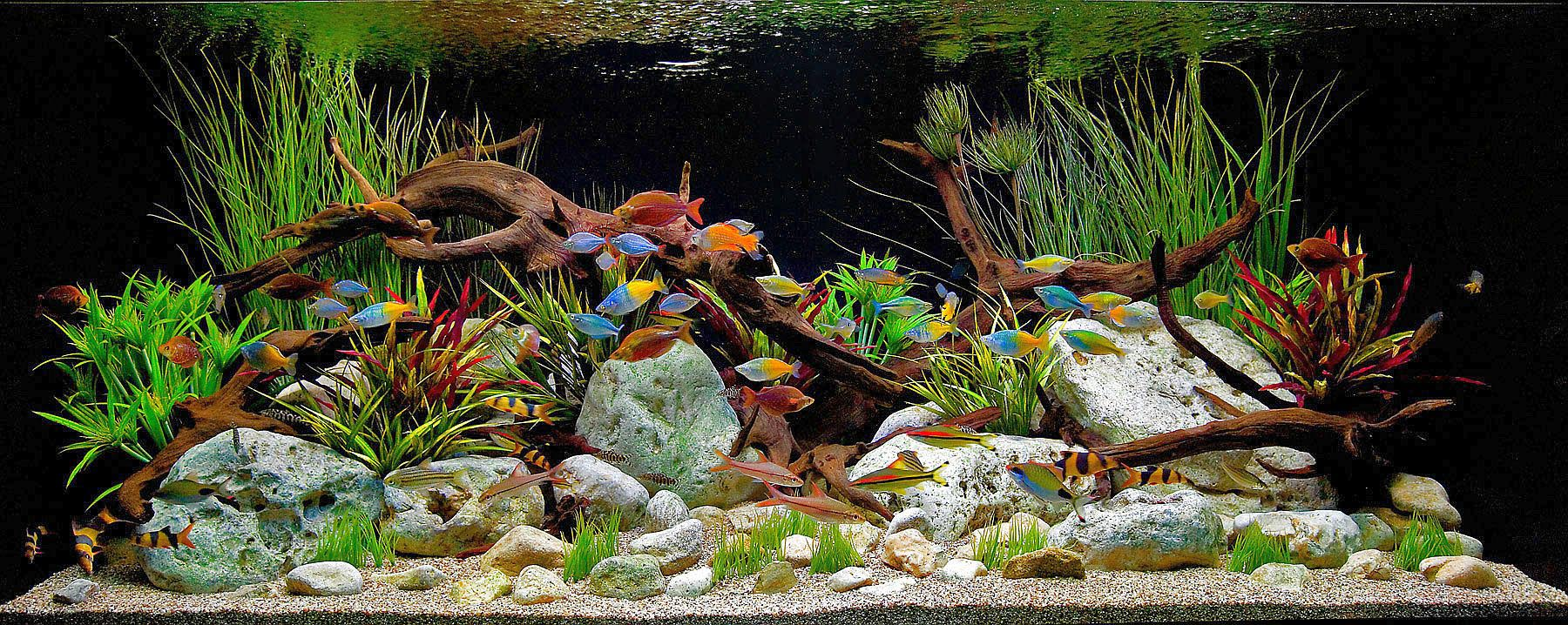 cool freshwater aquarium community fish - Freshwater Aquarium Design Ideas
