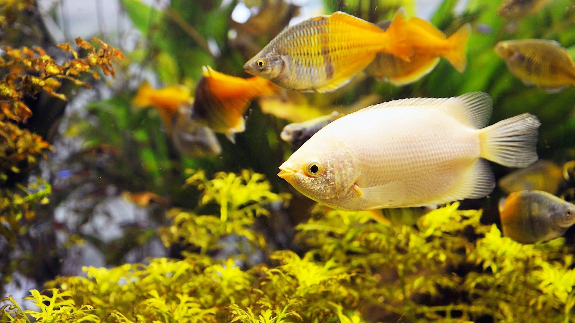 Cool Freshwater Fish Aquariums