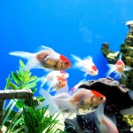 Cool Home Aquarium Fish