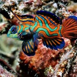 Cool Marine Aquarium Fish