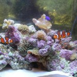 Cool Saltwater Aquarium Fish