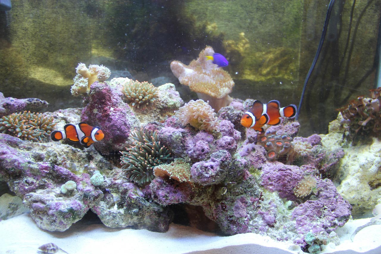 A little about cool aquarium fish aquarium design ideas for Cool fresh water fish