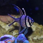 Cool Saltwater Fish for Aquarium