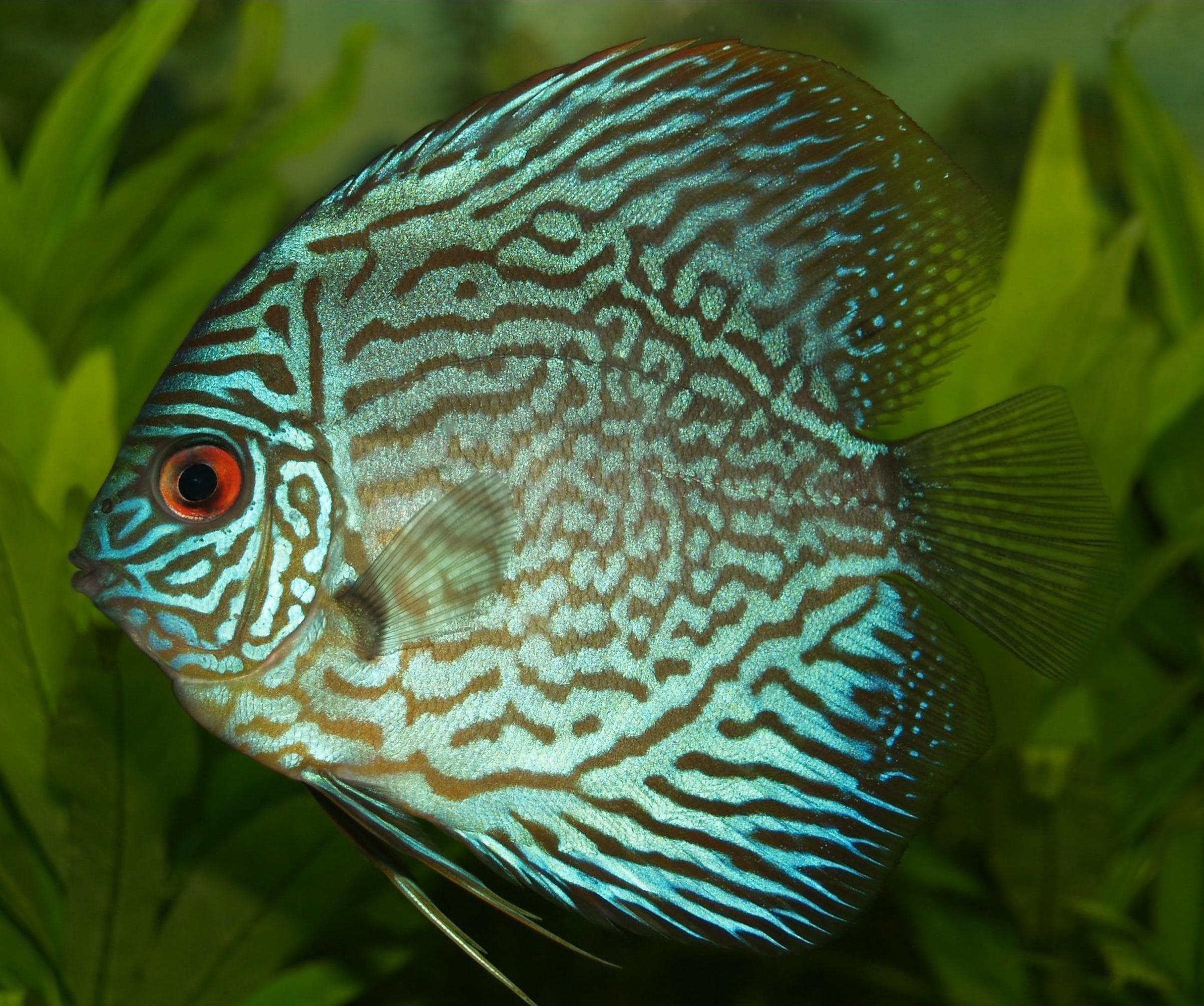 Cool Small Freshwater Aquarium Fish