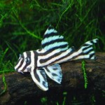 Cool Tropical Aquarium Fish