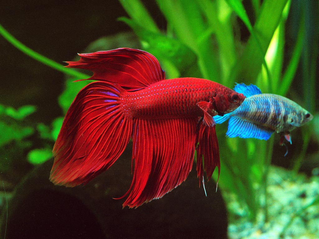 Cool Types of Aquarium Fish