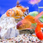 Cool Water Fish Aquarium