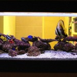 Copper Salt Water Aquarium