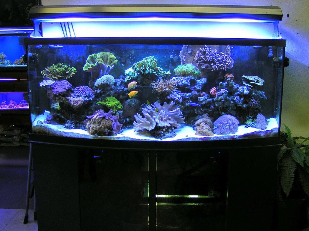 Coral for Aquarium Reef