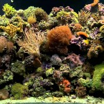 Coral Reef Aquarium Background