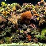 Coral Reef Aquarium Background