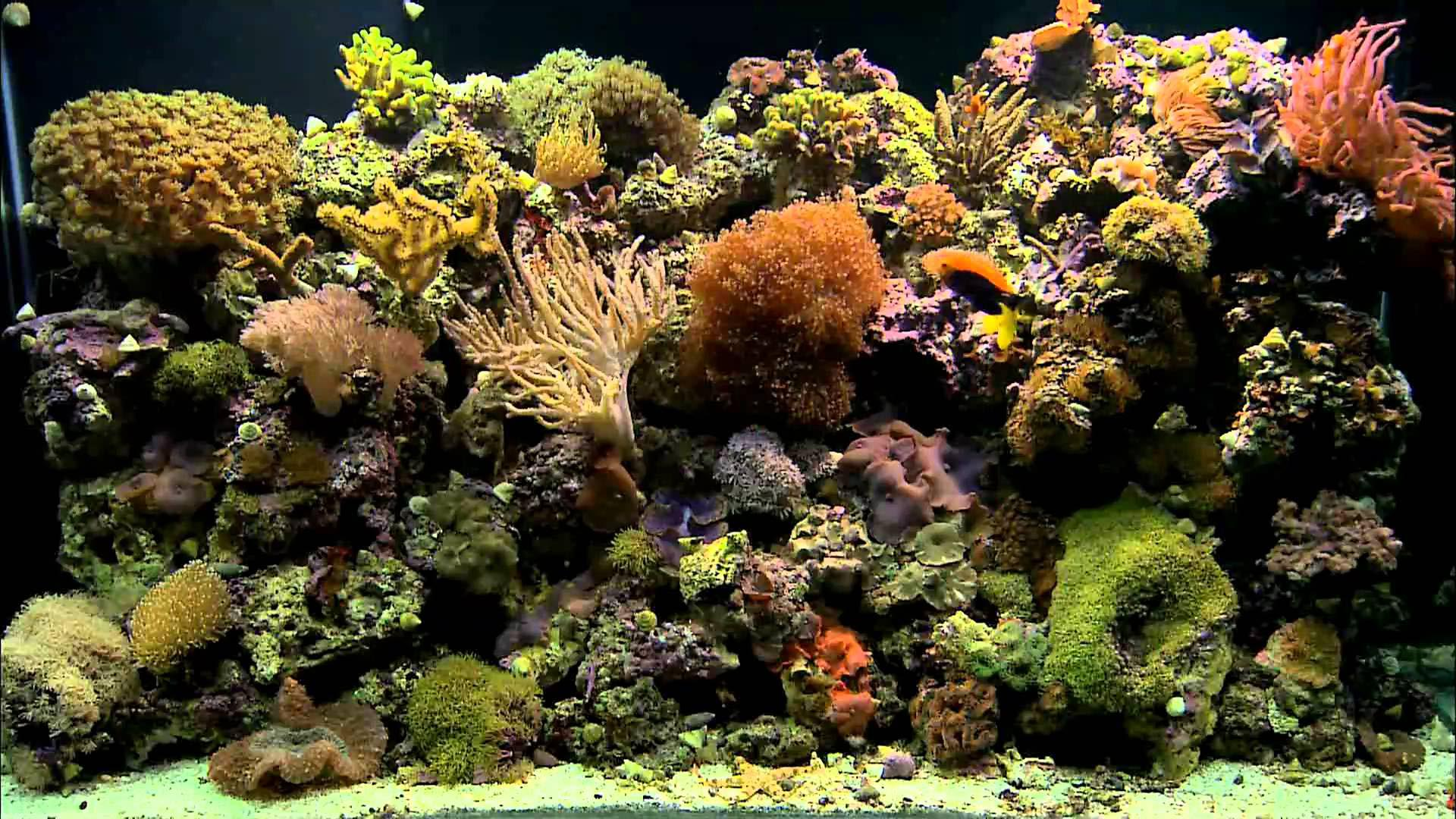 aquarium backgrounds coral - photo #2