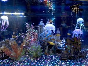 Coral Reef Aquarium Brampton