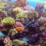 Coral Reef Aquarium for Beginners