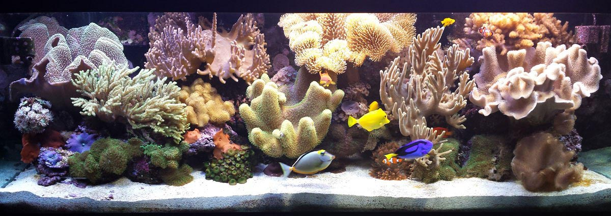 Coral Reef Aquarium Fort Wayne In