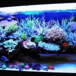 Coral Reef Aquarium Pictures