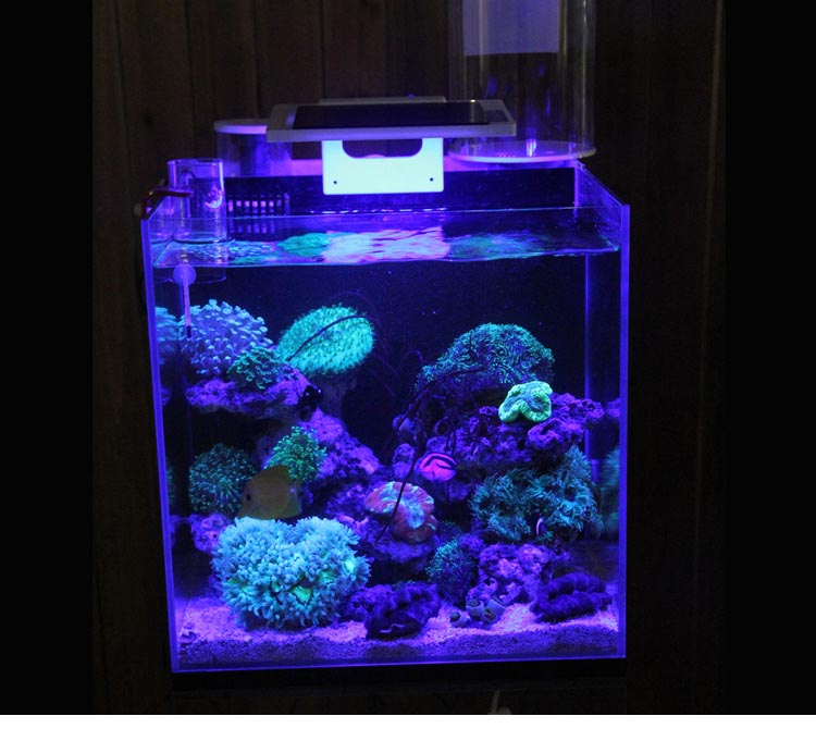 Coral Reef Aquarium Supplies