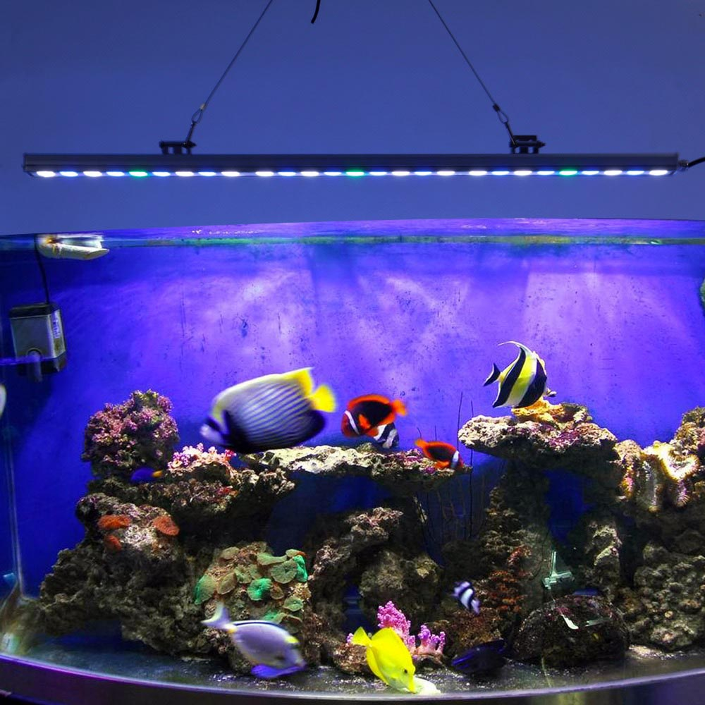 Coral Reef for Aquarium