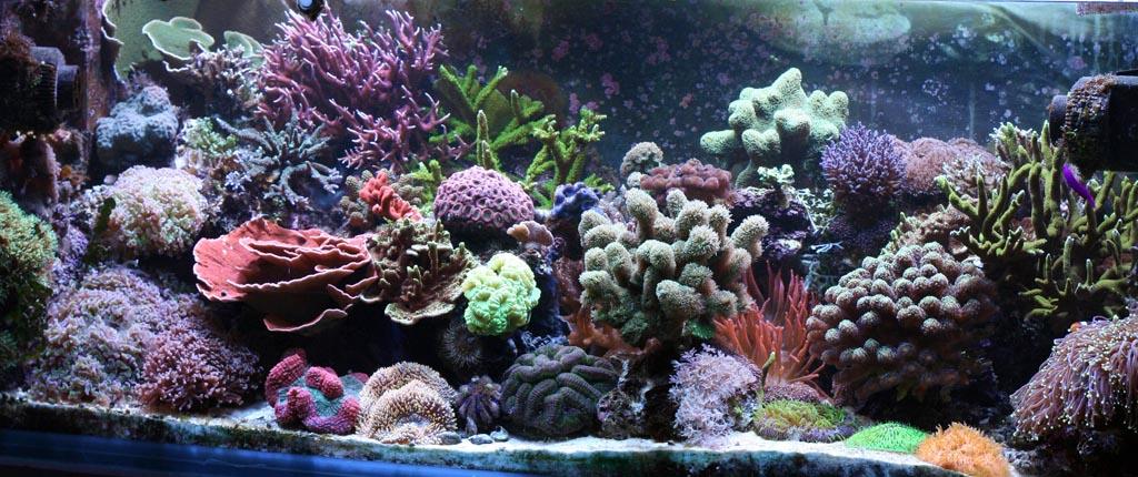 Coral Reef Saltwater Aquarium